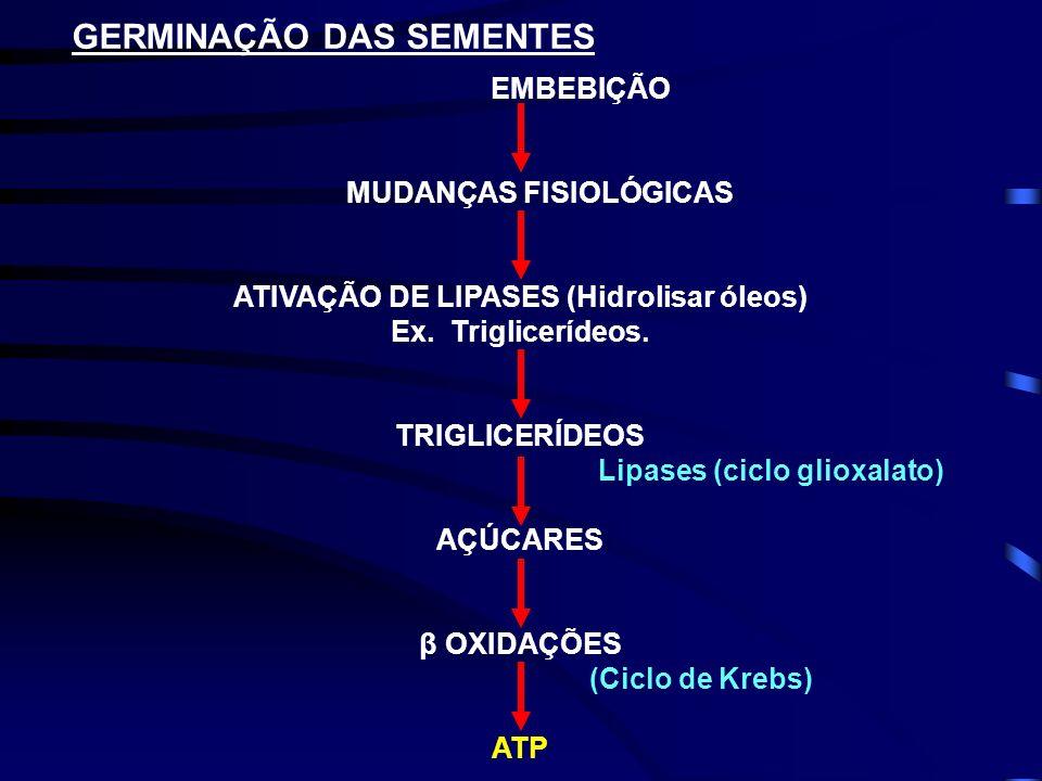 ATIVAÇÃO DE LIPASES (Hidrolisar óleos) Ex. Triglicerídeos.