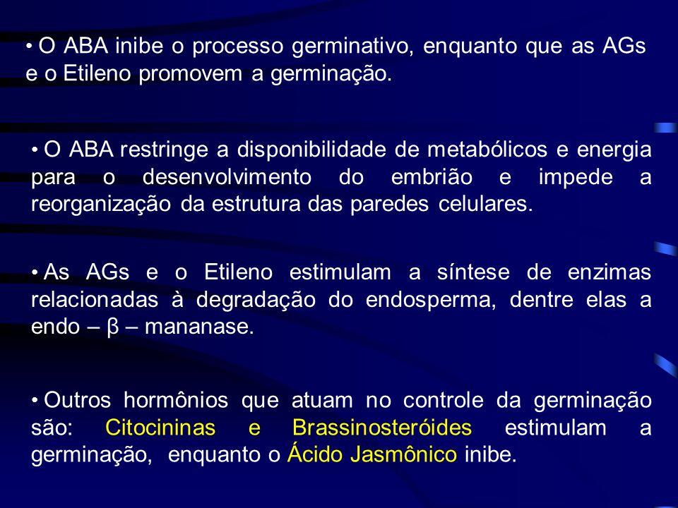 O ABA inibe o processo germinativo, enquanto que as AGs e o Etileno promovem a germinação.