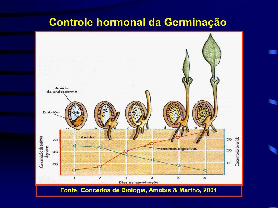 Controle hormonal da Germinação
