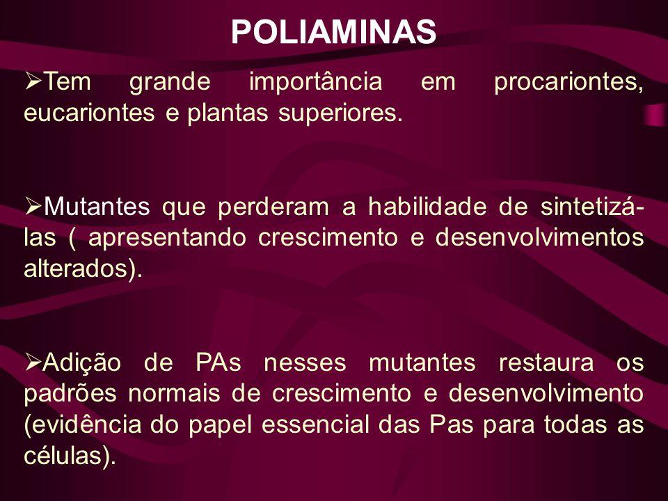 POLIAMINAS Tem grande importância em procariontes, eucariontes e plantas superiores.
