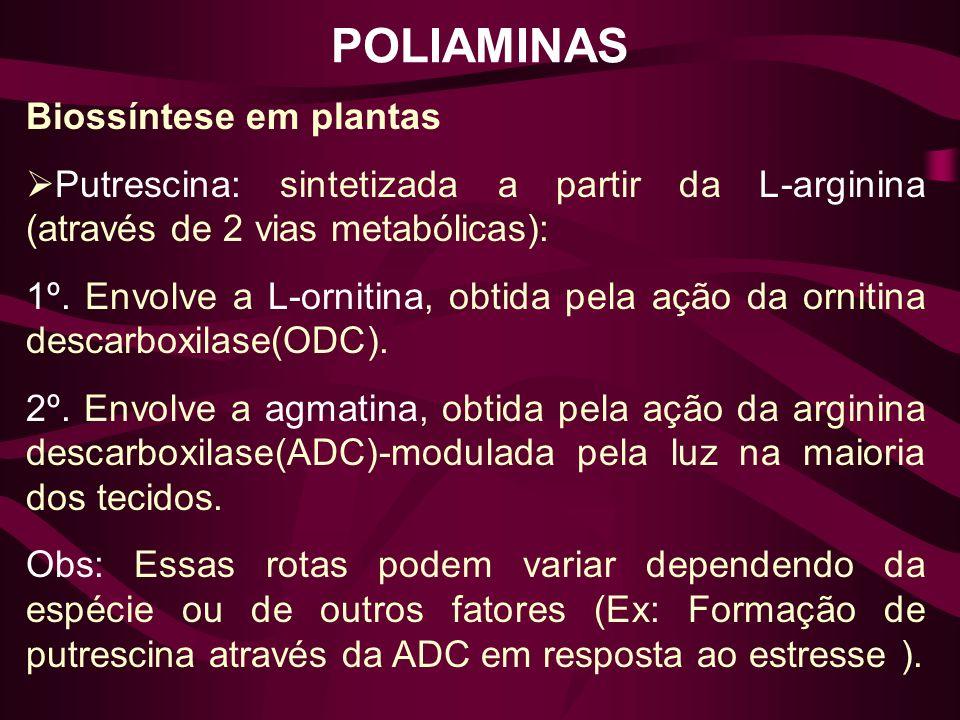 POLIAMINAS Biossíntese em plantas