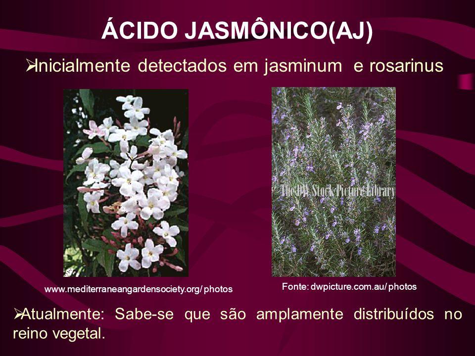 ÁCIDO JASMÔNICO(AJ) Inicialmente detectados em jasminum e rosarinus