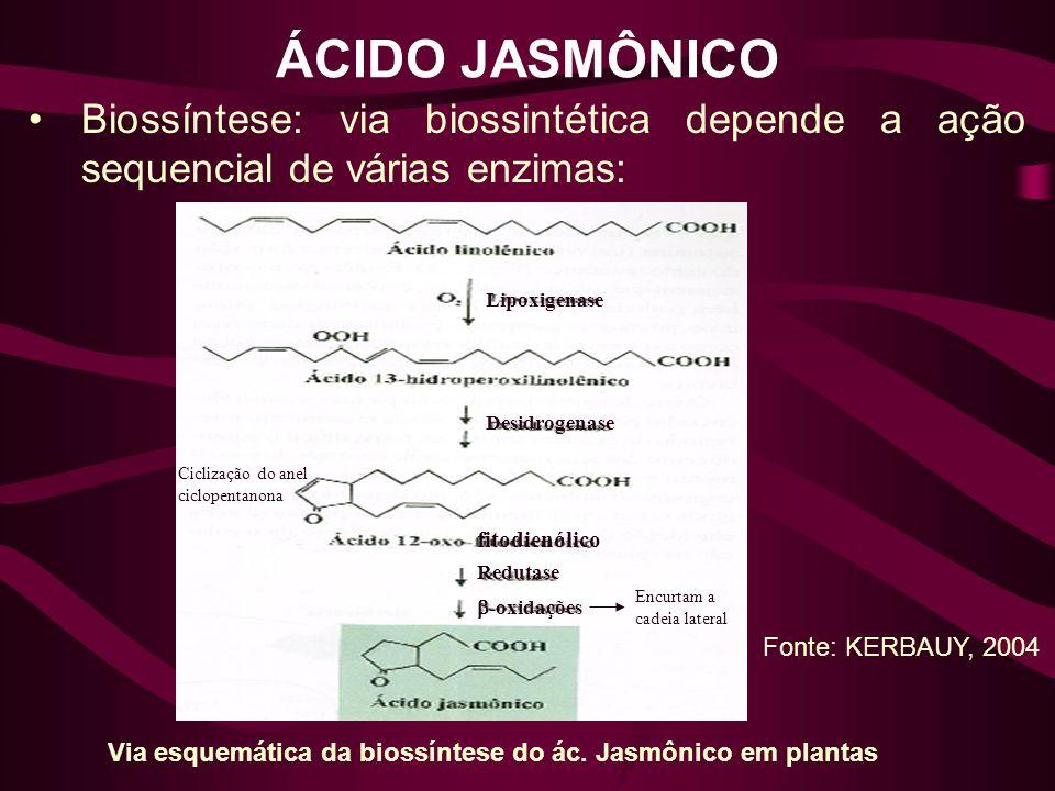 ÁCIDO JASMÔNICO Biossíntese: via biossintética depende a ação sequencial de várias enzimas: Lipoxigenase.