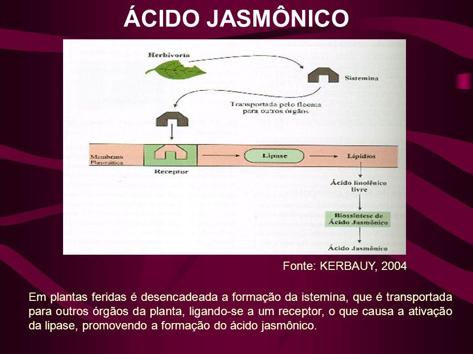 ÁCIDO JASMÔNICO Fonte: KERBAUY, 2004