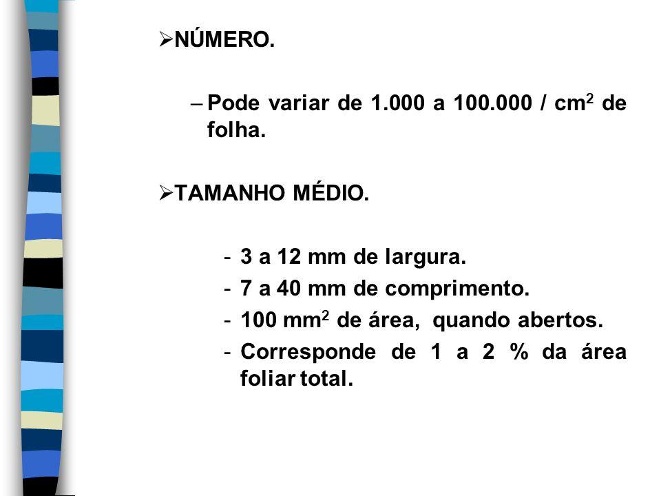 NÚMERO. Pode variar de 1.000 a 100.000 / cm2 de folha. TAMANHO MÉDIO. 3 a 12 mm de largura. 7 a 40 mm de comprimento.