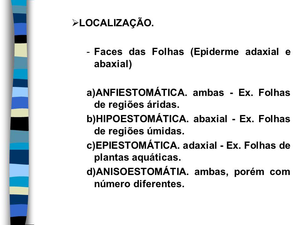 LOCALIZAÇÃO. Faces das Folhas (Epiderme adaxial e abaxial) a)ANFIESTOMÁTICA. ambas - Ex. Folhas de regiões áridas.