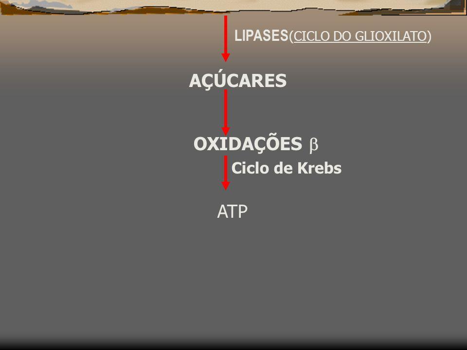 LIPASES(CICLO DO GLIOXILATO)