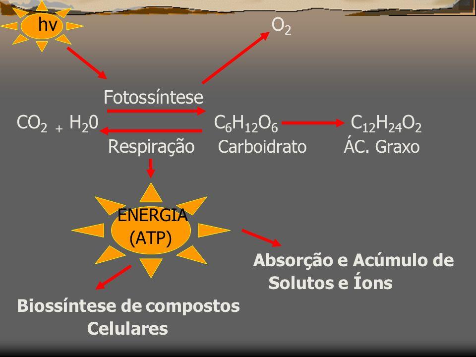 Fotossíntese CO2 + H20 C6H12O6 C12H24O2 hv O2