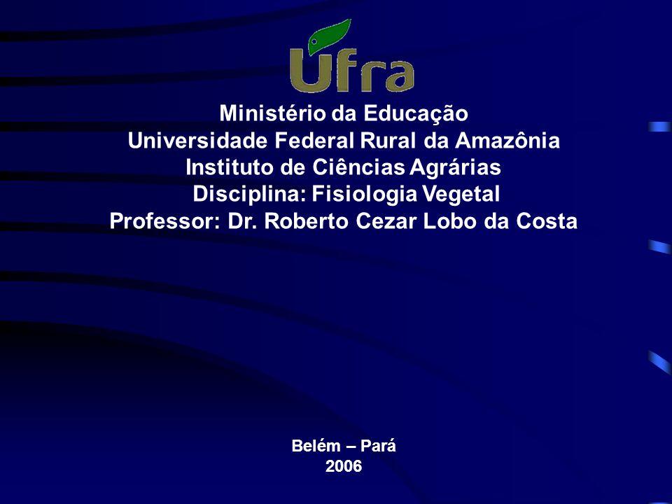 Ministério da Educação Universidade Federal Rural da Amazônia