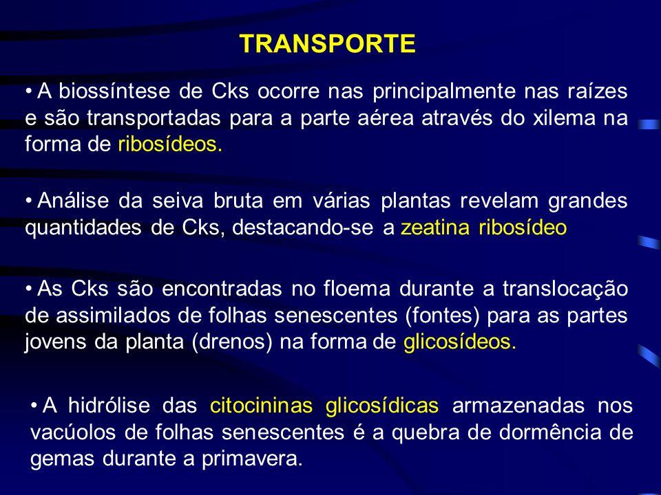 TRANSPORTE A biossíntese de Cks ocorre nas principalmente nas raízes e são transportadas para a parte aérea através do xilema na forma de ribosídeos.
