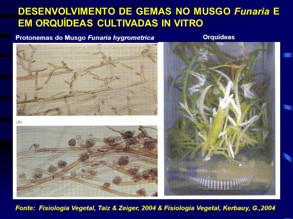DESENVOLVIMENTO DE GEMAS NO MUSGO Funaria E EM ORQUÍDEAS CULTIVADAS IN VITRO