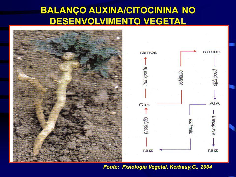 BALANÇO AUXINA/CITOCININA NO DESENVOLVIMENTO VEGETAL