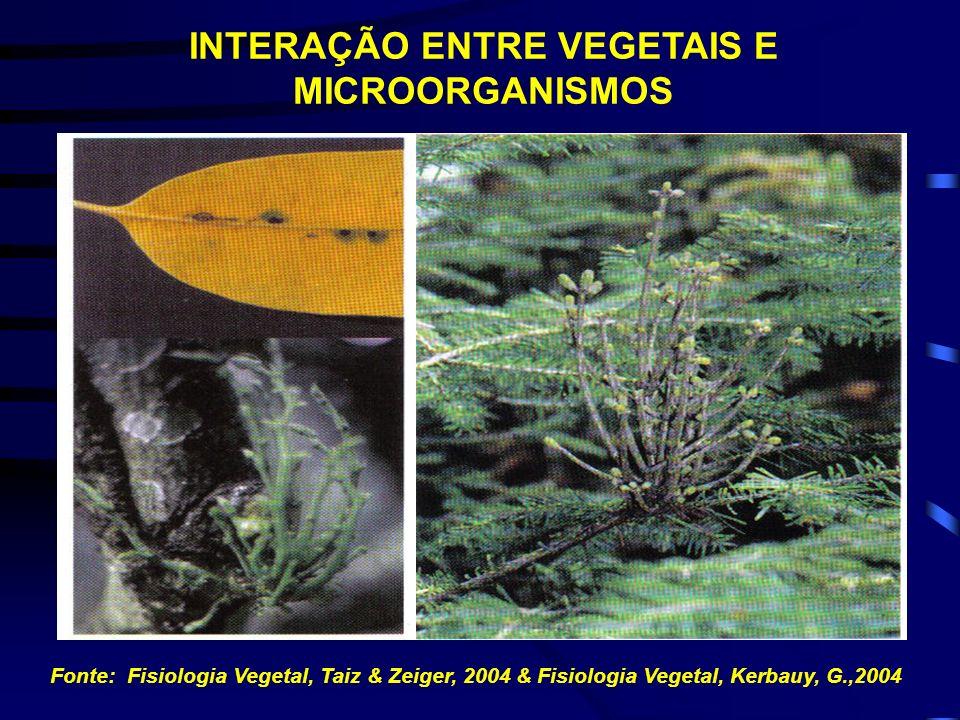INTERAÇÃO ENTRE VEGETAIS E MICROORGANISMOS