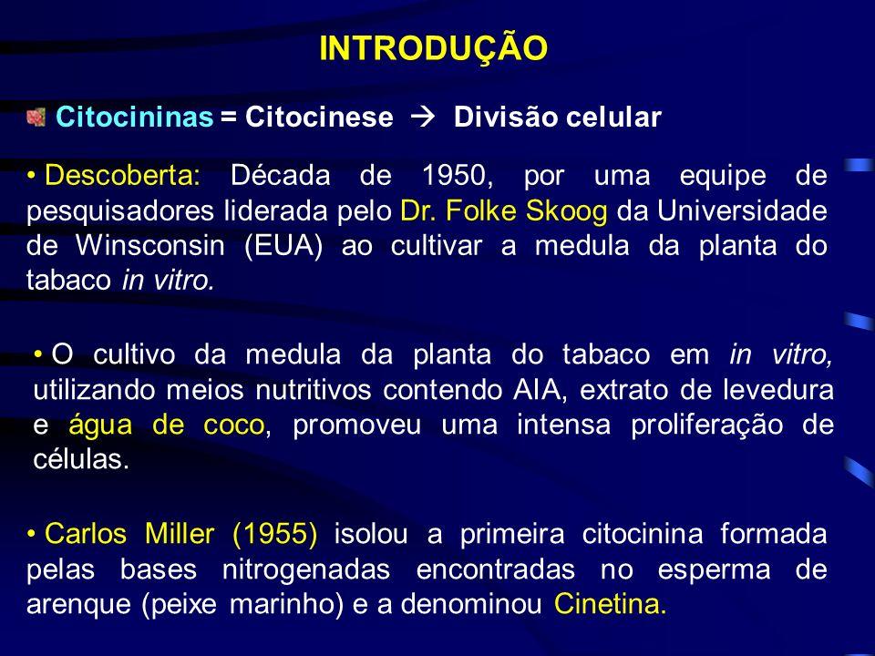 INTRODUÇÃO Citocininas = Citocinese  Divisão celular