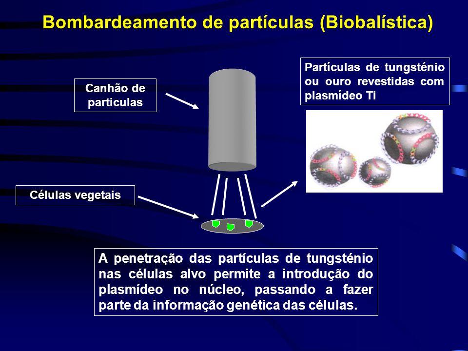 Bombardeamento de partículas (Biobalística)