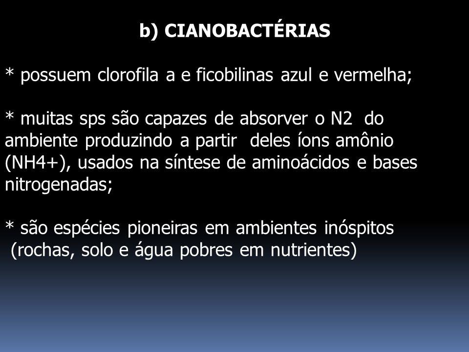 b) CIANOBACTÉRIAS * possuem clorofila a e ficobilinas azul e vermelha;