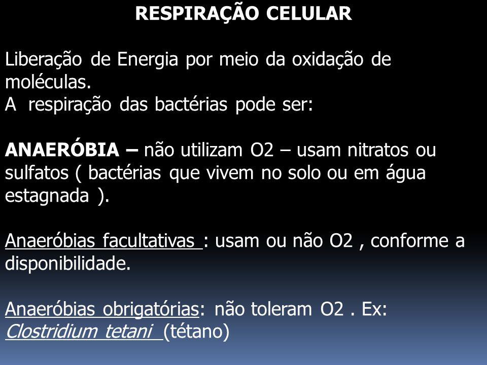 RESPIRAÇÃO CELULAR Liberação de Energia por meio da oxidação de moléculas. A respiração das bactérias pode ser: