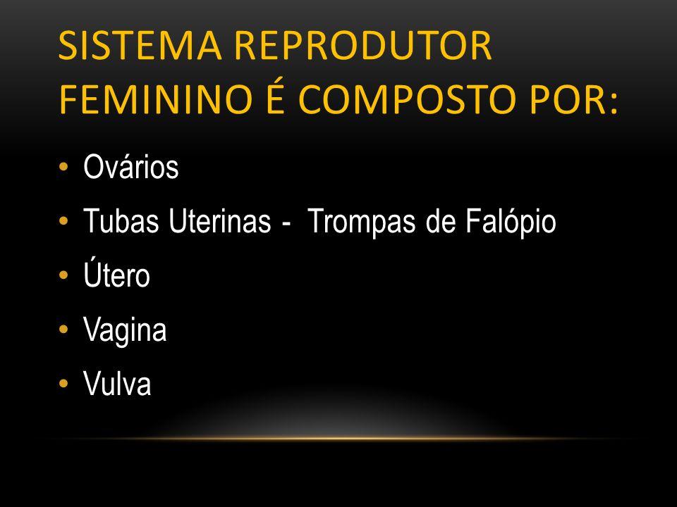 Sistema reprodutor feminino é composto por: