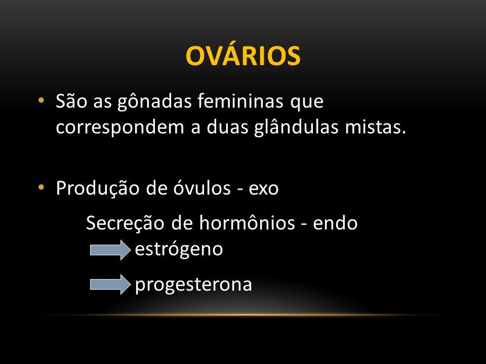 Ovários São as gônadas femininas que correspondem a duas glândulas mistas. Produção de óvulos - exo.
