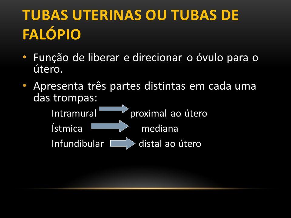 Tubas uterinas ou tubas de Falópio