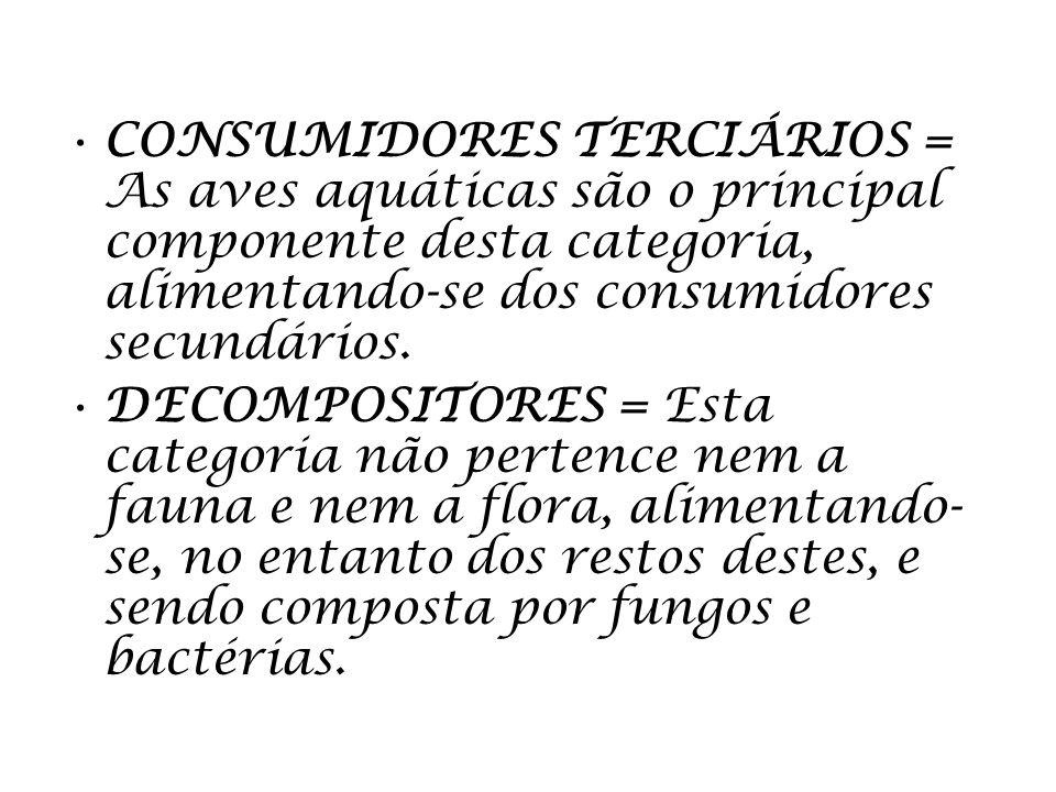 CONSUMIDORES TERCIÁRIOS = As aves aquáticas são o principal componente desta categoria, alimentando-se dos consumidores secundários.