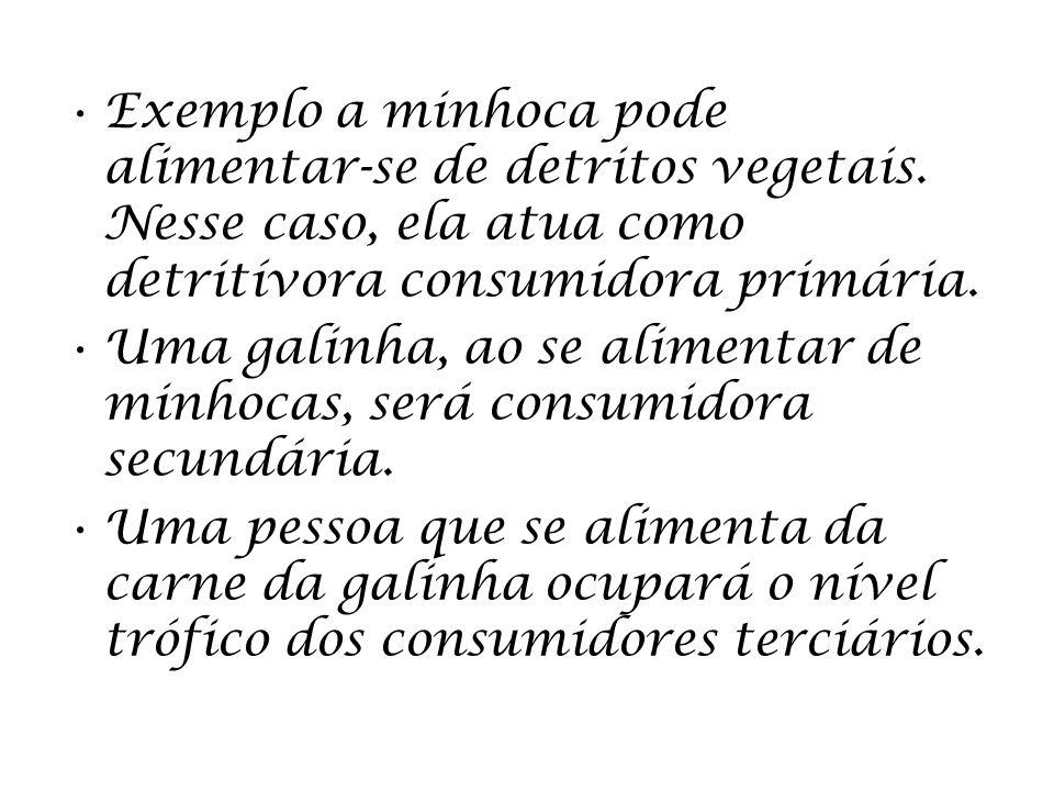 Exemplo a minhoca pode alimentar-se de detritos vegetais