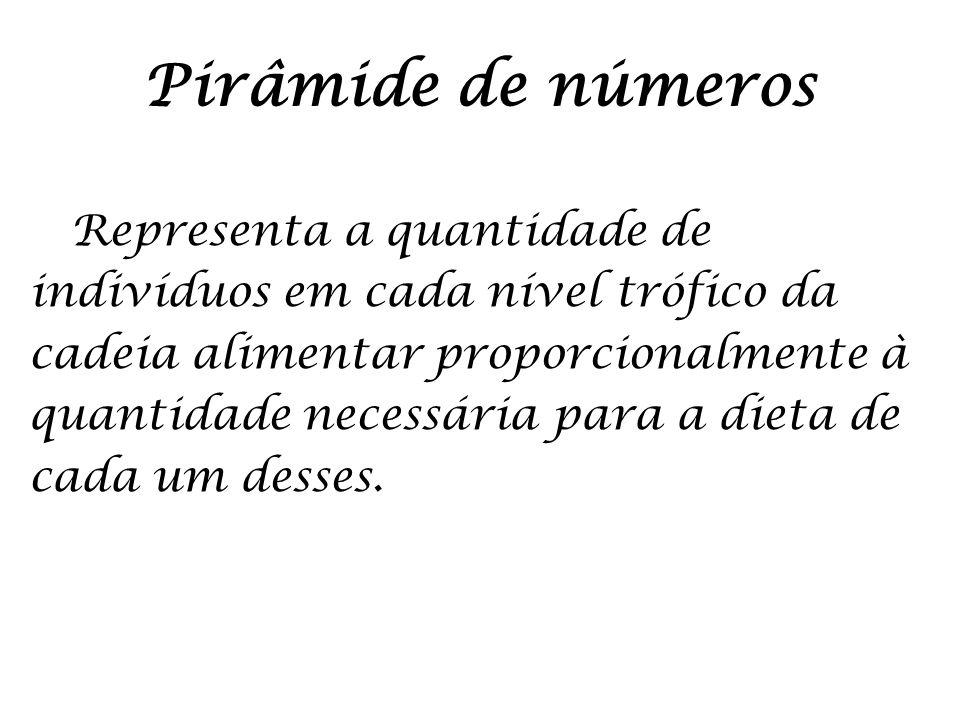 Pirâmide de números Representa a quantidade de