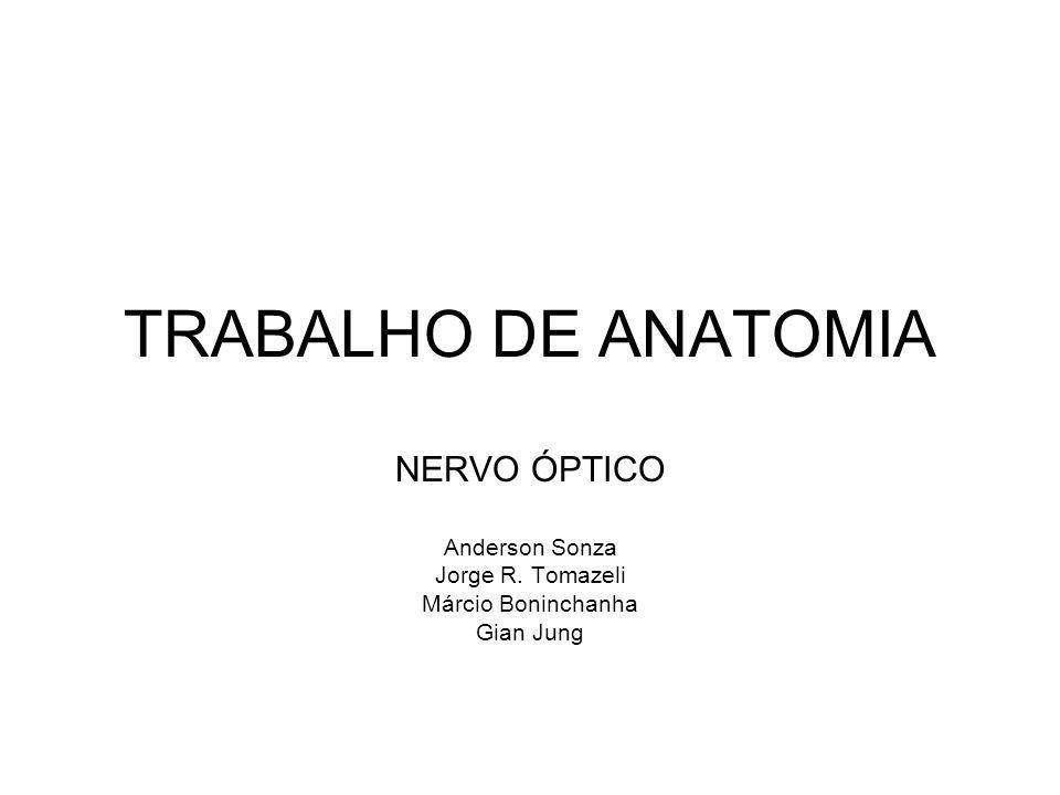 TRABALHO DE ANATOMIA NERVO ÓPTICO Anderson Sonza Jorge R. Tomazeli