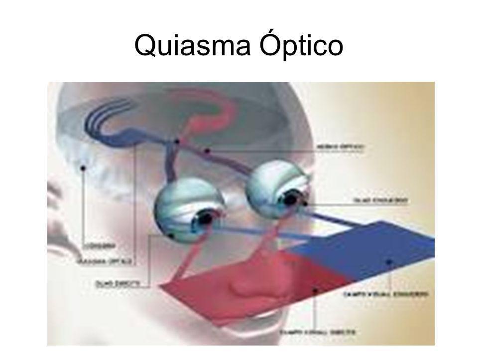 Quiasma Óptico