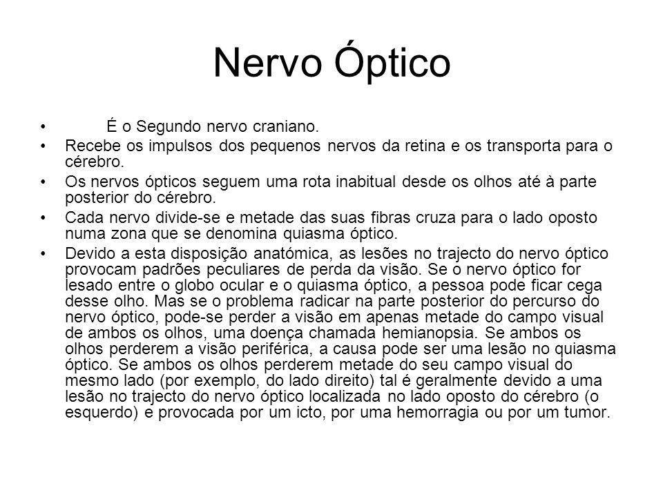Nervo Óptico É o Segundo nervo craniano.