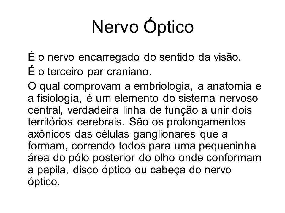 Nervo Óptico É o nervo encarregado do sentido da visão.