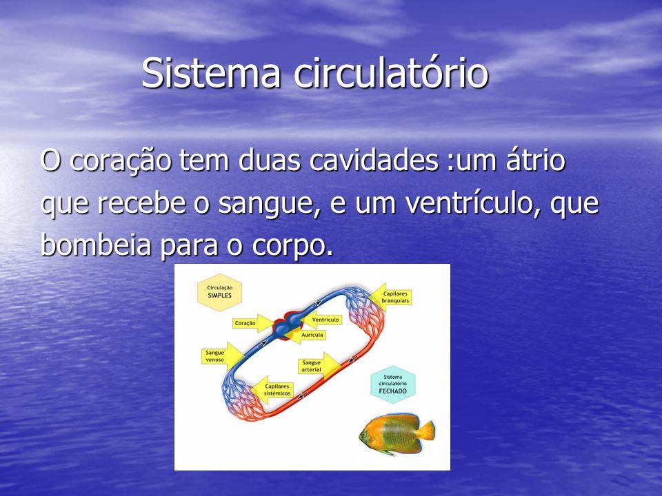 Sistema circulatório O coração tem duas cavidades :um átrio