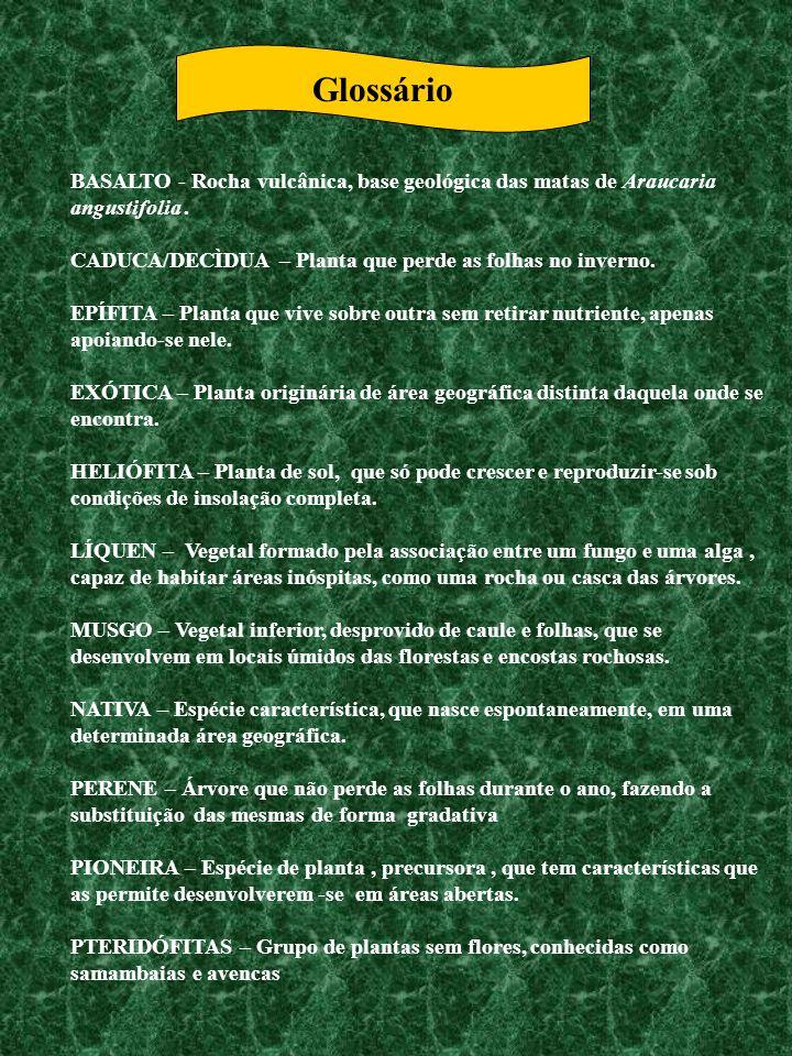 GlossárioBASALTO - Rocha vulcânica, base geológica das matas de Araucaria angustifolia . CADUCA/DECÌDUA – Planta que perde as folhas no inverno.