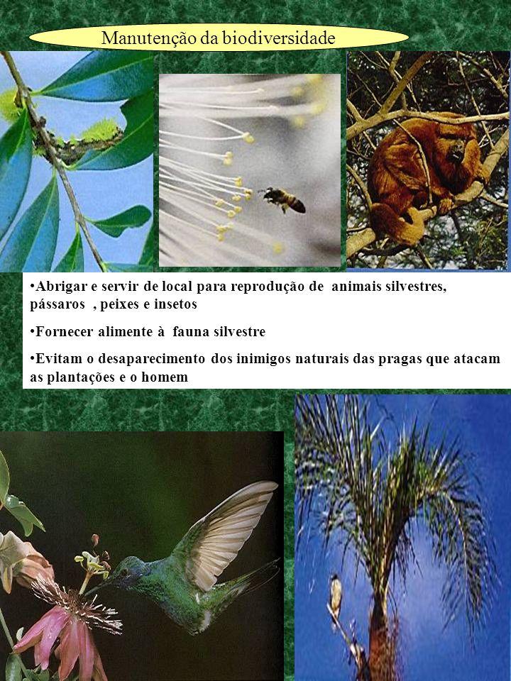 Manutenção da biodiversidade