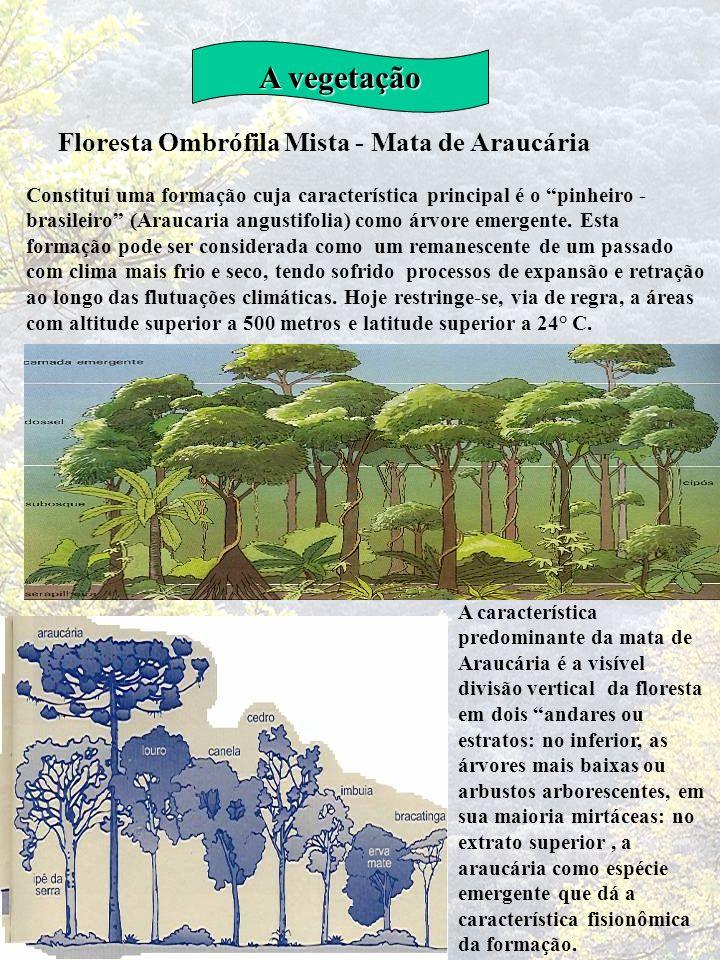 A vegetação Floresta Ombrófila Mista - Mata de Araucária