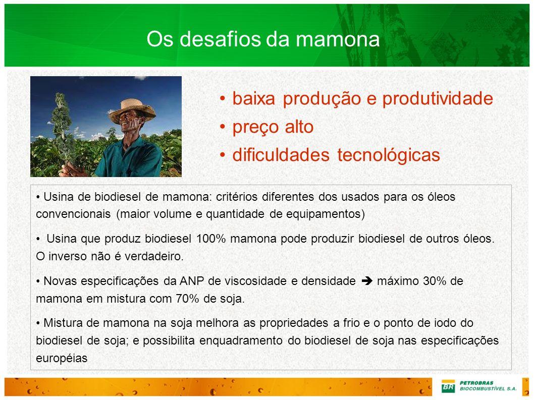 Os desafios da mamona baixa produção e produtividade preço alto