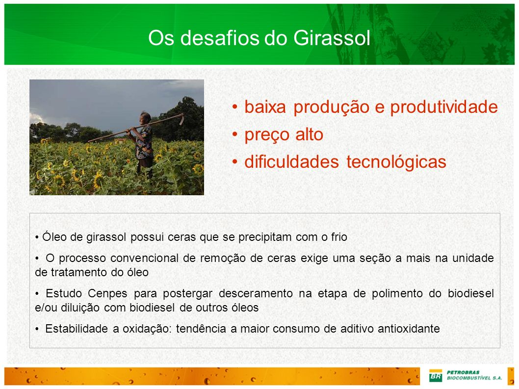 Os desafios do Girassol
