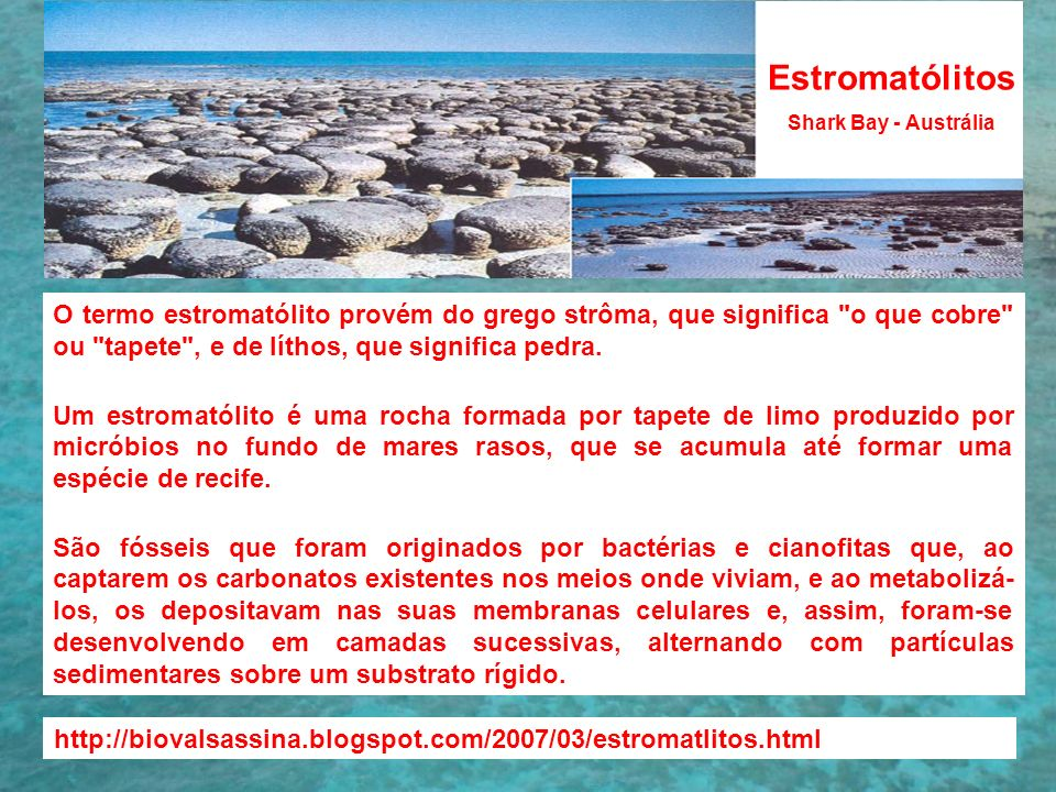 EstromatólitosShark Bay - Austrália.