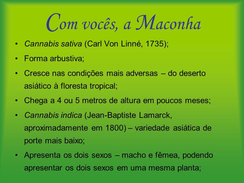Com vocês, a Maconha Cannabis sativa (Carl Von Linné, 1735);