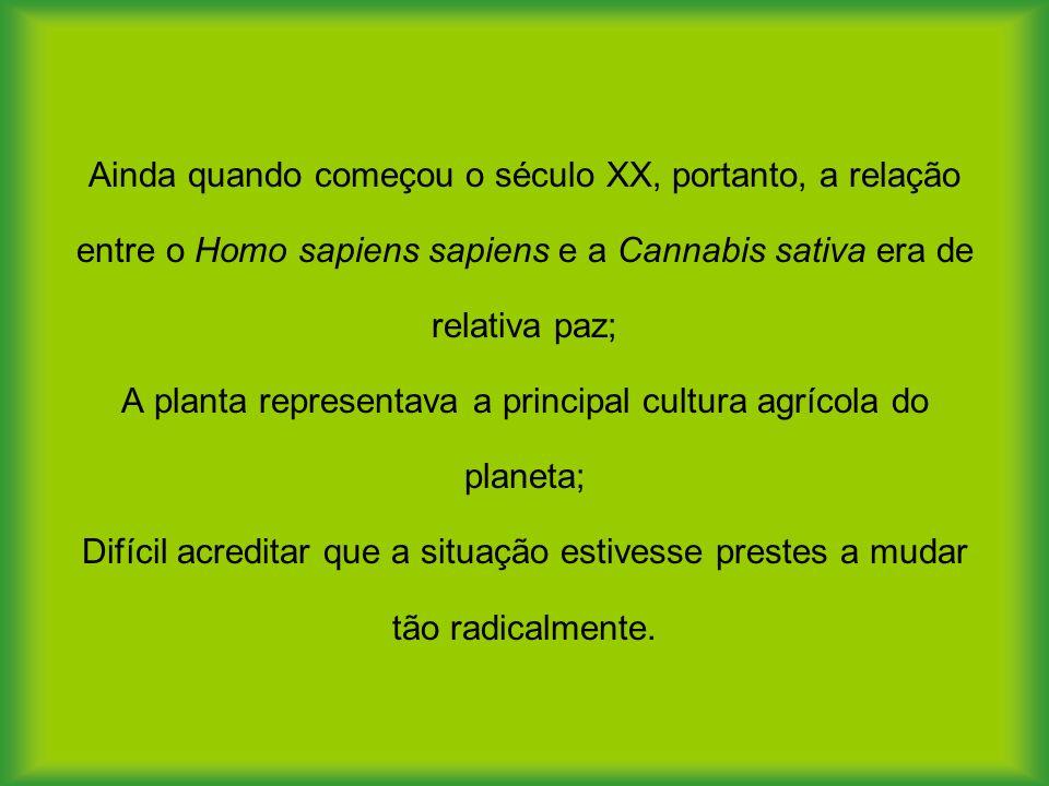 Ainda quando começou o século XX, portanto, a relação entre o Homo sapiens sapiens e a Cannabis sativa era de relativa paz; A planta representava a principal cultura agrícola do planeta; Difícil acreditar que a situação estivesse prestes a mudar tão radicalmente.