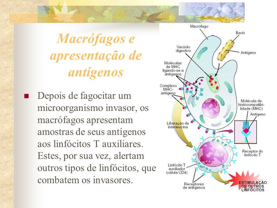 Macrófagos e apresentação de antígenos