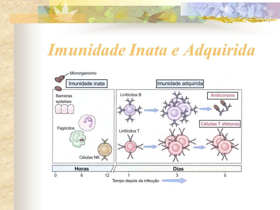 Imunidade Inata e Adquirida