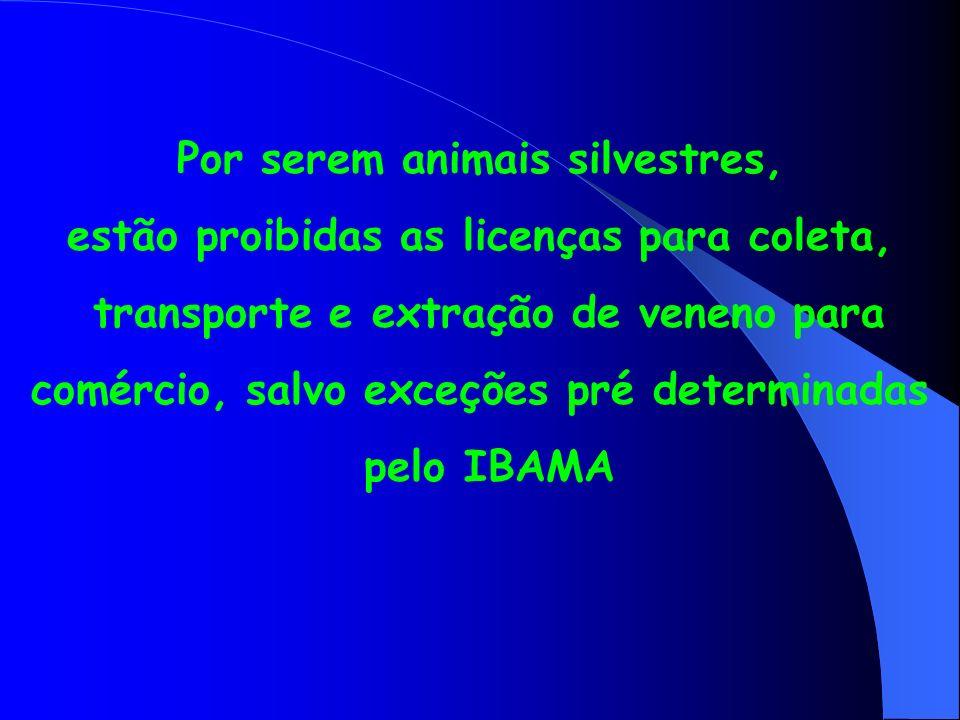 Por serem animais silvestres, estão proibidas as licenças para coleta,