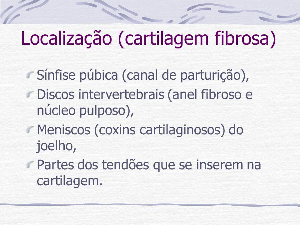 Localização (cartilagem fibrosa)