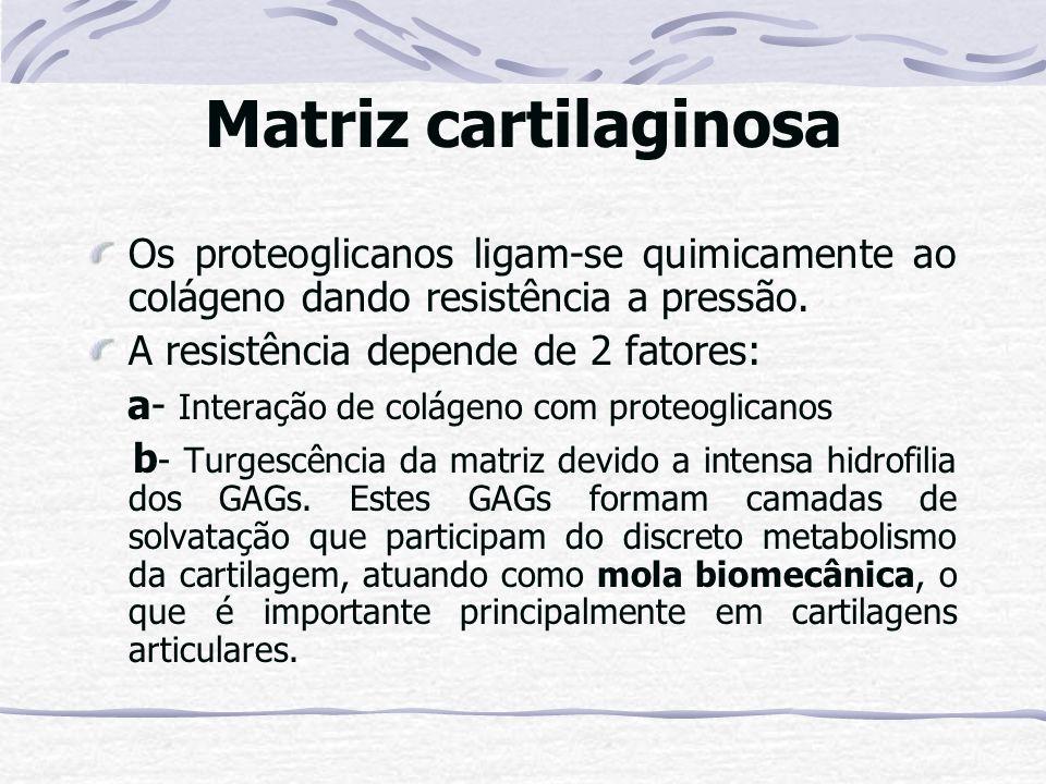 Matriz cartilaginosa Os proteoglicanos ligam-se quimicamente ao colágeno dando resistência a pressão.