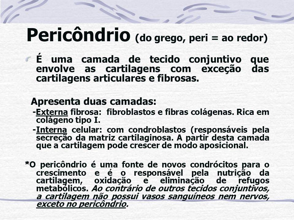 Pericôndrio (do grego, peri = ao redor)