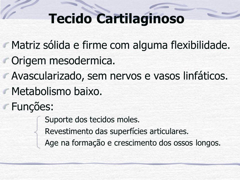 Tecido Cartilaginoso Matriz sólida e firme com alguma flexibilidade.