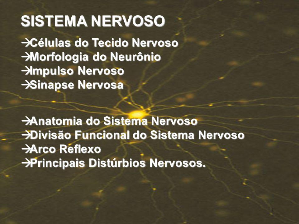 SISTEMA NERVOSO Células do Tecido Nervoso Morfologia do Neurônio