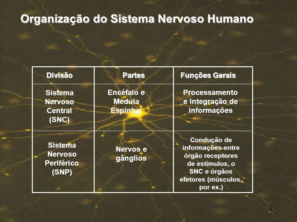 Organização do Sistema Nervoso Humano