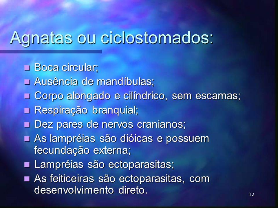 Agnatas ou ciclostomados: